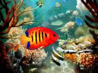Tropical Fish 3D Screensaver screenshot