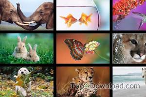Windows 8 Themes - Animals screenshot